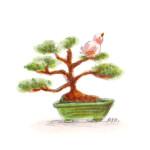 小鳥と盆栽5